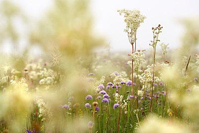 Wild flowers in Umbria - p7190089 by Rudi Sebastian