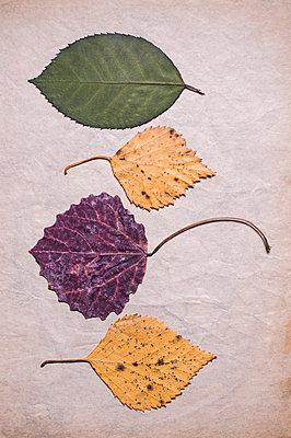 Dried leaves - p971m1006857 by Reilika Landen