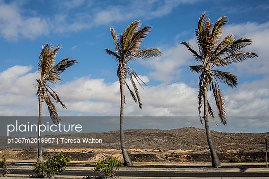 Windschief - p1367m2019957 von Teresa Walton