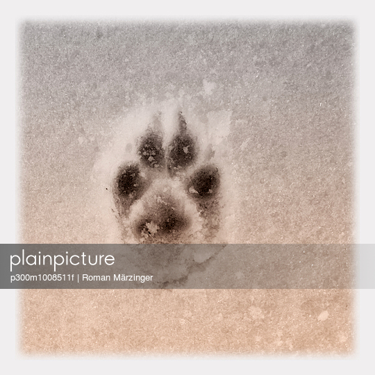imprint of dog paw in snow, Bavaria, Germany