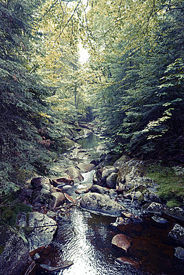 Small river in a forest - p1189m2176206 by Adnan Arnaout