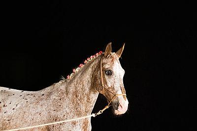 Pferd an der Longe - p5730229 von Birgid Allig