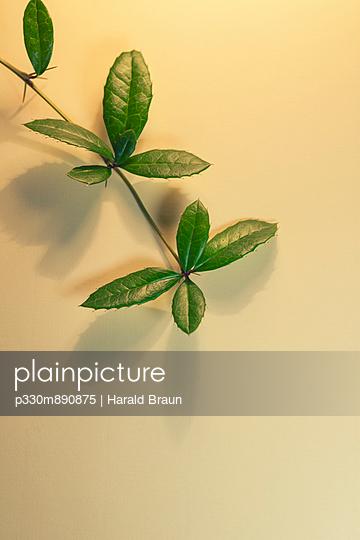 Ranke mit Dornen und Blätter - p330m890875 von Harald Braun