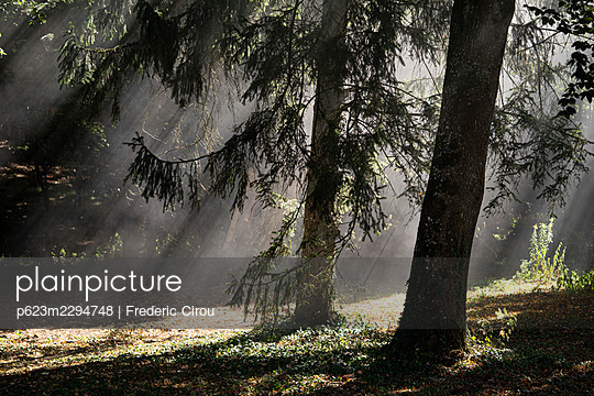 Sunlight filtering through trees in park - p623m2294748 by Frederic Cirou