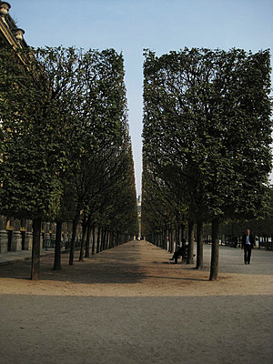 cut trees in Paris - p9380042 by Christina Holmes