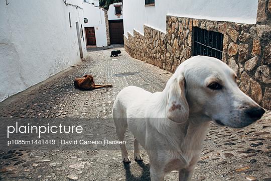 Strassenhunde in Ronda - p1085m1441419 von David Carreno Hansen
