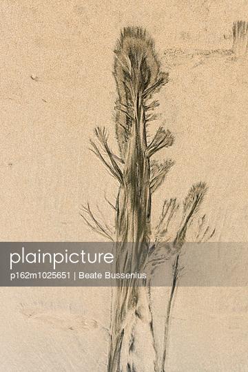 Das Meer als Maler eines Baumes - p162m1025651 von Beate Bussenius