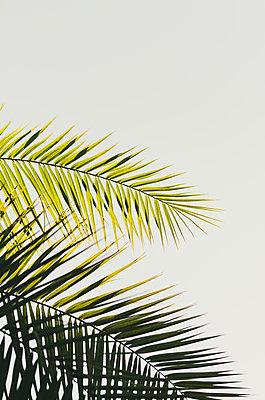 Palm Tree Leaves - p1335m2082636 by Daniel Cullen