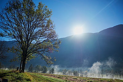 Morning in the austrian alps with tree and fog, Imst, Austria, Europe, 2017 - p1362m1584093 by Charles Knox