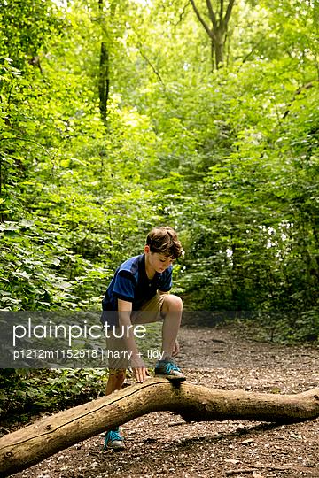 Junge klettert auf einen Baumstamm im Wald - p1212m1152918 von harry + lidy