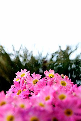 Pink - p4500087 von Hanka Steidle