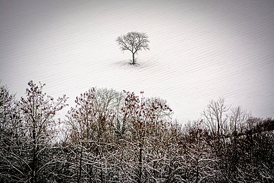 Isolated tree in a snowy field. - p813m1000129 by B.Jaubert