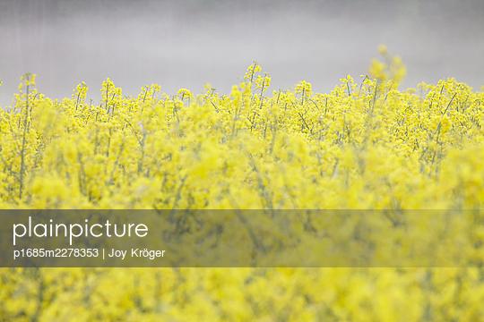 Rape field - p1685m2278353 by Joy Kröger