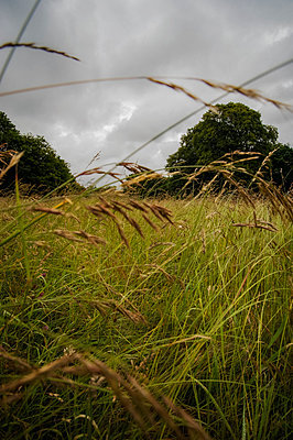 Meadow with long grass - p1047m1452296 by Sally Mundy