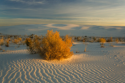 Scenic view of desert at White Sands National Monument - p1166m1545782 by Cavan Social