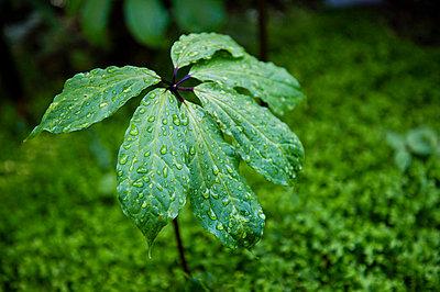 Wet - p227m720968 by Uwe Nölke