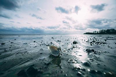 Muschel am Strand - p299m2071296 von Silke Heyer