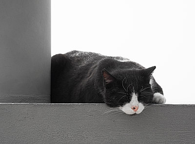 Sleeping cat - p1280m2177552 by Dave Wall