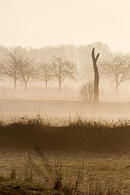Morning in Brandenburg - p739m992595 by Baertels