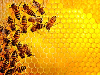 Honey bees Sweden - p312m1076836f by Jonn