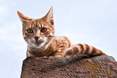 Neugierige Katze schaut von oben herab - p1162m1461817 von Ralf Wilken