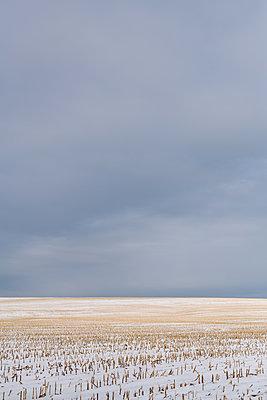 Cornfield and big empty sky - p1335m2082647 by Daniel Cullen