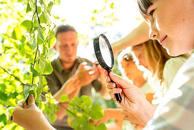School children examinig leaves on tree, with their magnifying glasses - p300m2160747 von Fotoagentur WESTEND61