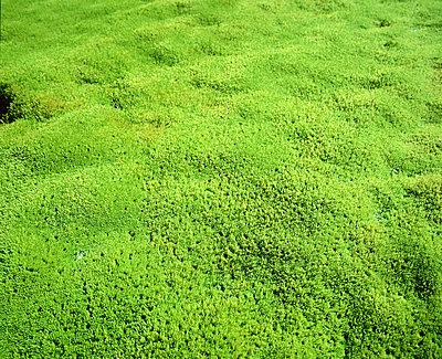 Green moss - p4551060f by Kristjan Maack