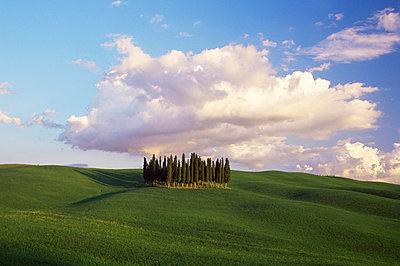 Countryside near Montalcino, Siena area, Tuscany, Italy, Europe - p8712500 by Nico Tondini