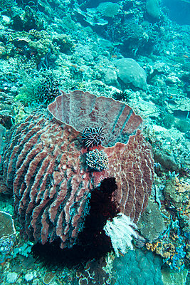 Coral Reef Underwater - p1014m745975 by Jeff Hornbaker