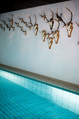 Deers at the Pool - p1036m763187 by Anna-Lisa Mauriello