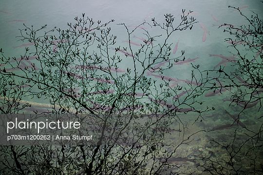 p703m1200262 by Anna Stumpf