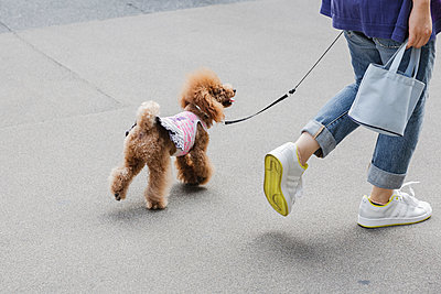 Walking the poodle - p1085m1426001 by David Carreno Hansen