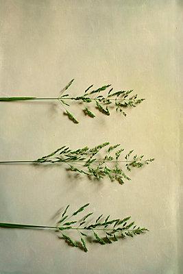 Grass - p1228m1150254 by Benjamin Harte