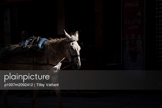 White horse coming out of the shadow - p1007m2092412 by Tilby Vattard