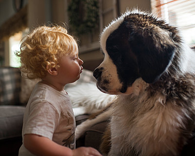 Side view of cute baby boy looking at Saint Bernard face to face in living room - p1166m2067900 by Cavan Images