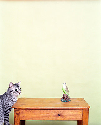 Cat and budgie - p2490036 by Ute Mans