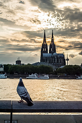 View from the Rheinpromenade to the Cologne Cathedral - p401m1425766 by Frank Baquet