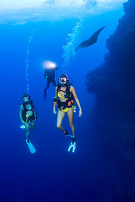 A group of divers and a manta ray (Manta alfredi) on one of the corners of the Backwall at Molokini Marine Preserve; Maui, Hawaii, United States of America - p442m2032284 by Dave Fleetham