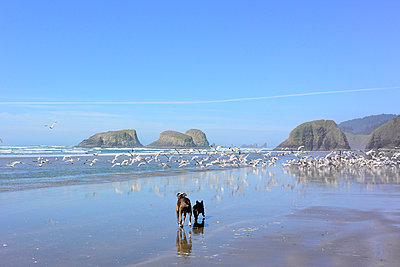 Rear view of dogs running while birds flying at beach against blue sky - p1166m1518826 by Cavan Images