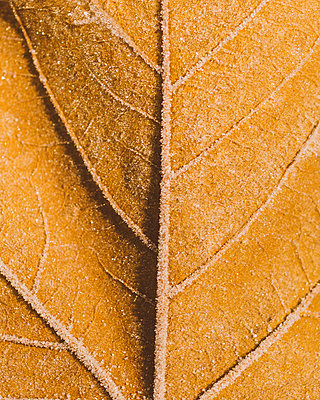 Frost - p1507m2026340 by Emma Grann