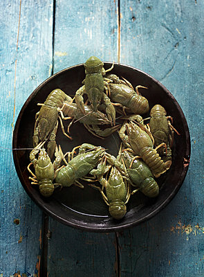 Raw crayfish - p922m2071506 by Juliette Chretien