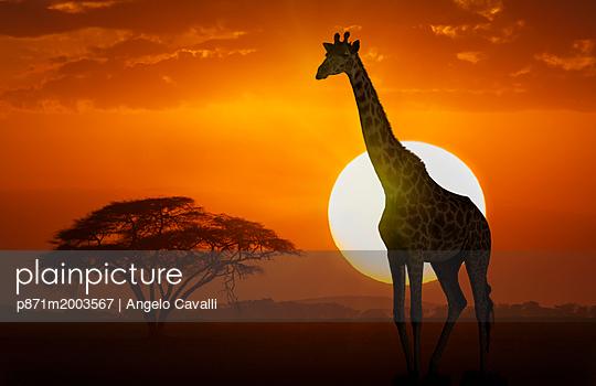 p871m2003567 von Angelo Cavalli