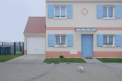 Plastikschwein vor einem Wohnhaus - p1270m1108368 von Cécile Henryon