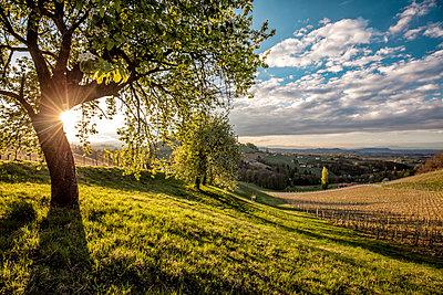p300m1449563 von Daniel Waschnig Photography
