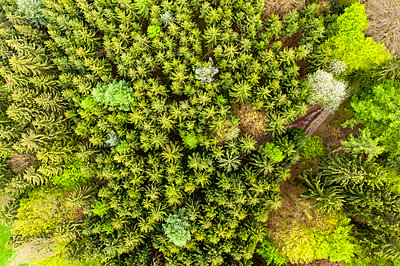 Germany, Hesse, Aerial view of green lush mixed forest in Odenwald mountains - p300m2155394 by Martin Moxter