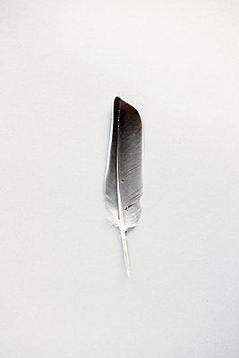 Feather - p1006m1040349 by Danel