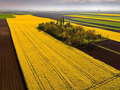 Serbia. Agricultural fields with yellow rape field, aerial view at summer - p300m1568347 by oticki