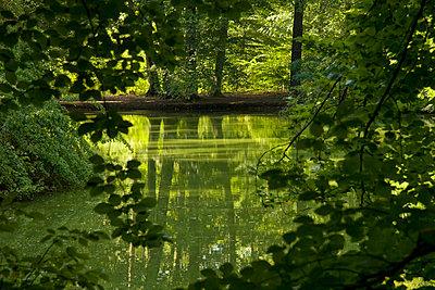 Romantischer Stadtwald - p4170026 von Pat Meise