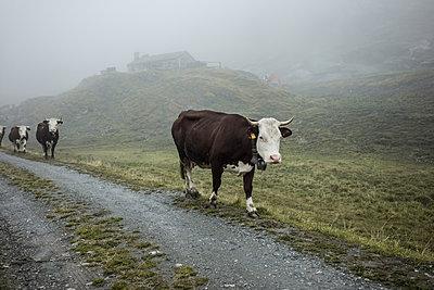 Aostatal - p741m2165687 von Christof Mattes